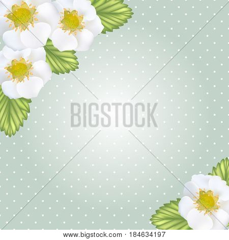 White strawberry flowers and leaves frame on dotted backgroung. Spring flowers concept