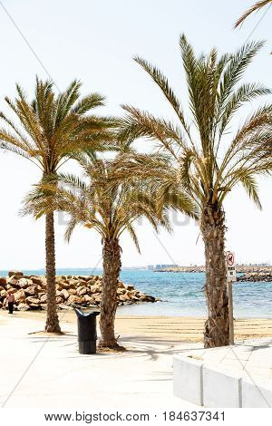 Three palm trees on the seafront promenade.