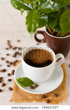 Cup of coffee beans in front of small coffee tree in  a potted plant