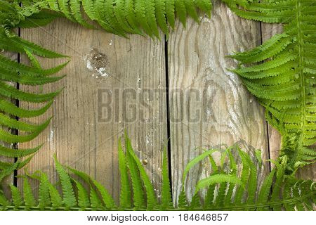 Fern background. Fern photo concept. Holidays photo concept. Copyspace