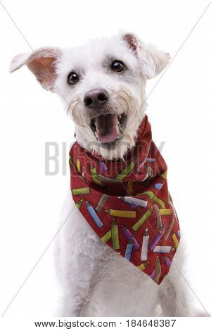 An Adorable Mixed Breed Dog Wearing Red Scarf