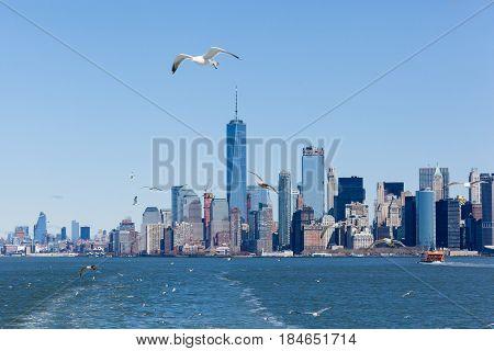 Lower Manhattan Skyline With Seagulls
