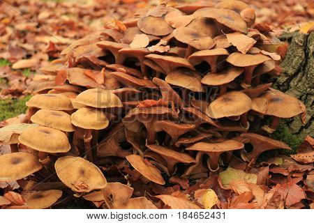 Group of mushrooms in a fall forrest