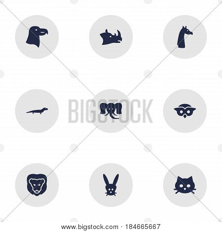Set Of 9 Brute Icons Set.Collection Of Night Fowl, Camelopard, Rhinoceros And Other Elements.