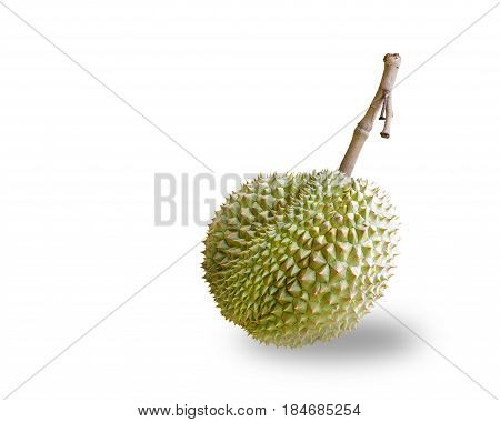 Isolated Mon Thong Or Golden Pillow Durain , King Of Tropical Fruit