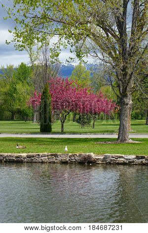 Spring day at a city park in Boise, Idaho.