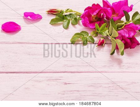 the pink roses on pink wooden table