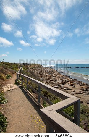 Elephant Seal Colony viewing vista walking path at Piedras Blancas north of San Simeon on the Central Coast of California USA