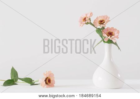 Bouquet of zinnia flowers on white background