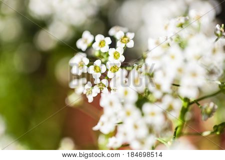 Background of many pretty small flowers blooming in a garden