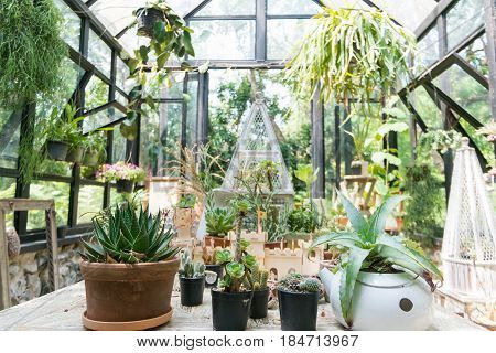 A Glasshouse  Is A Structure In Which Plants Requiring Regulated Climatic Conditions Are Grown.