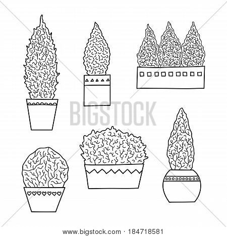 Set of hand drawn outline miniature growing coniferous trees in pots isolated on white background.