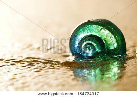 glass tropical sea  shell with waves under sunrise sun light, shallow dof