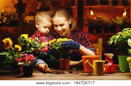 family mother and baby son grow flowers transplant seedlings in the gardeners greenhouse
