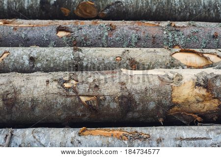 horizontal front view close up of freshly cut forest fir trees arranged in a pile and cleared of branches
