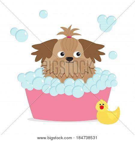 Little glamour tan Shih Tzu dog taking a bubble bath. Yellow duck bird toy. Cute cartoon baby character. Flat design. White background. Vector illustration