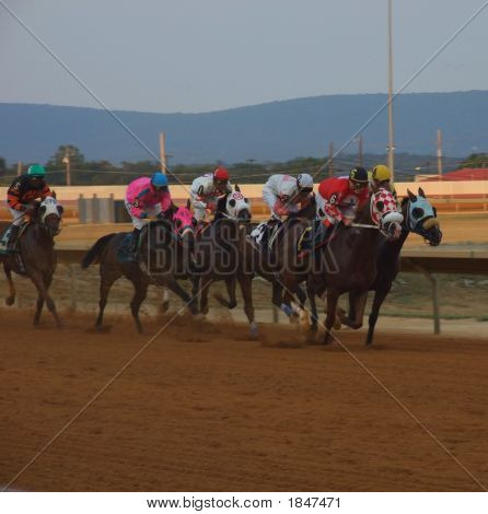 Horses On The Track
