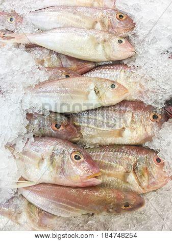 Treadfin Breams Fish