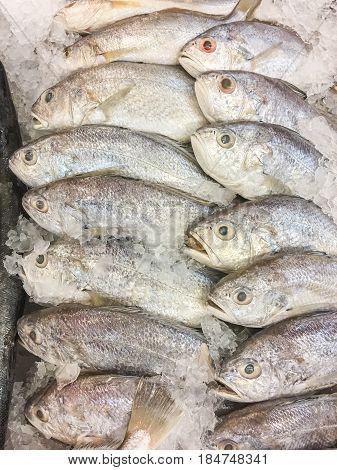 White Croaker Fish