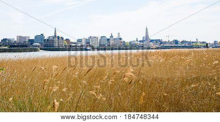 View On Antwerp By The River Scheldt In Flanders, Belgium
