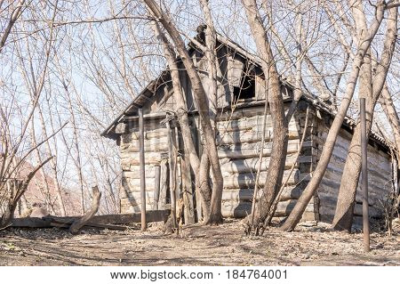 Abandoned Wooden House Among the Trees in Early Spring Lit by the Sun