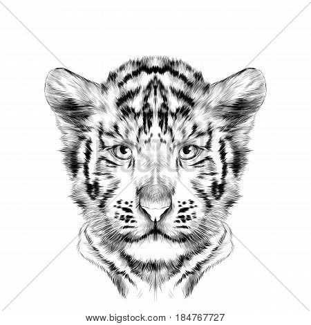 head cub the white tiger is symmetric sketch vector graphics black and white drawing