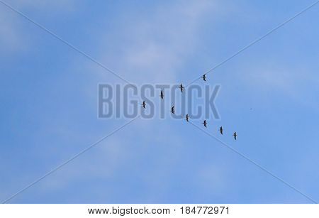 eagle sky flight  blue geese atmosphere sun summer shoal time cloud flying weather outdoor  high sunny clouds spring view nature white fly airplane summer day heaven clear  cloudscape cloudy air