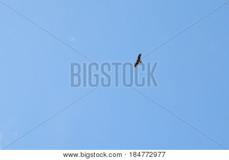 sky flight  blue geese atmosphere sun summer shoal time cloud flying weather outdoor  high sunny clouds spring view nature white fly airplane summer day heaven clear  cloudscape cloudy air