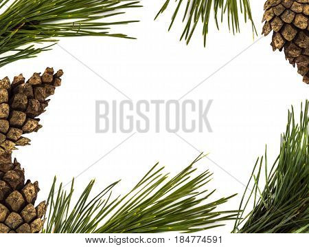 Pine Branch Border With Blank Space For Text