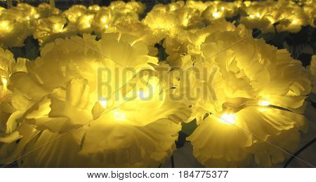 Yellow flowers with light.can usd as background.