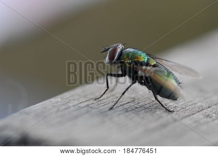 Extreme close up image of fly with shallow dept of field
