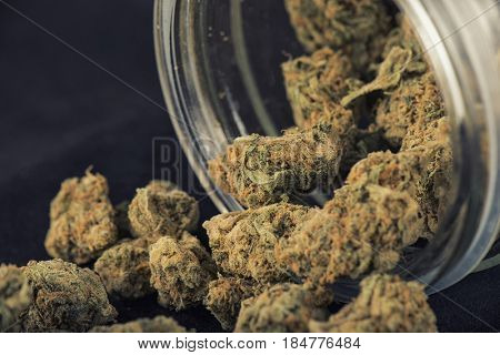 Detail of cannabis buds (grape god strain) on a glass jar isolated over black background - medical marijuana concept