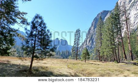 Landscape in Yosemite Valley in Yosemite National Park in California, striking rocks of the Sierra Nevada and Ponderosa pines, blue sky,