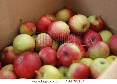healthy bio apples from my garden in a box