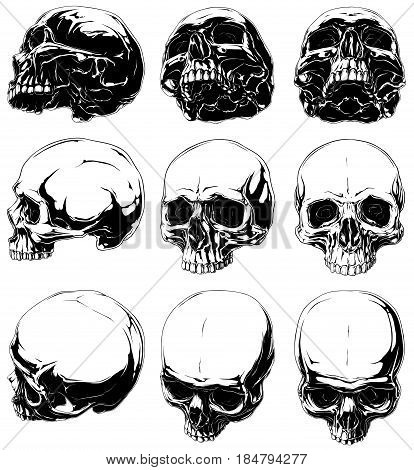 Vector set of 9 realistic horror detalied graphic black and white human skulls in different projections without lower jaw