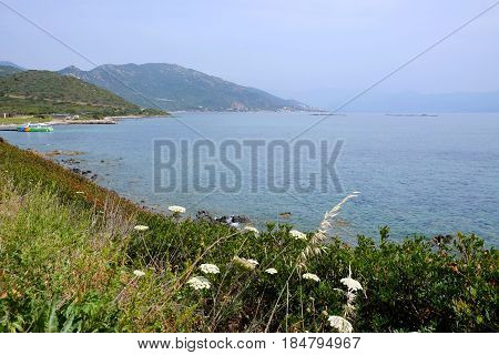 View on the sea the mountains and spring flowers. Location the Sanguiner Archipelago Corsica France.