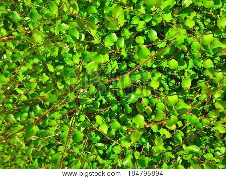 Branching green nature Branching green nature Branching green nature