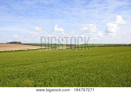 Wheat Fields And Vale Of York