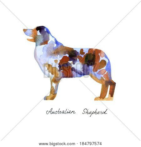 Watercolor Australian shepherd. Silhouette dog on white background