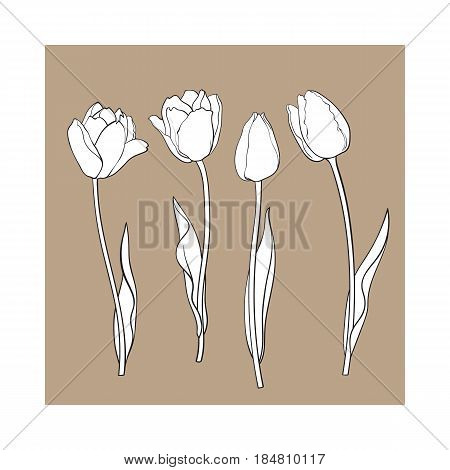 Hand drawn set of side view black and white open and closed tulip flower, sketch style vector illustration isolated on brown background. hand drawing of tulip flowers, decoration element
