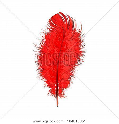 Hand drawn tender, fluffy red bird feather, sketch style vector illustration on white background. Realistic hand drawing of scarlet, red tender feather