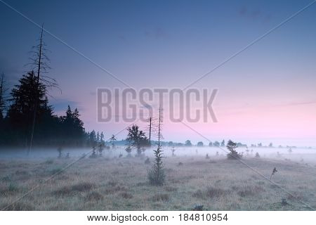 misty sunrise over meadow and coniferous forest