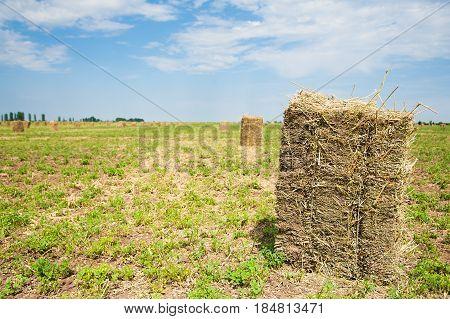 Hay Harvesting. Landscape
