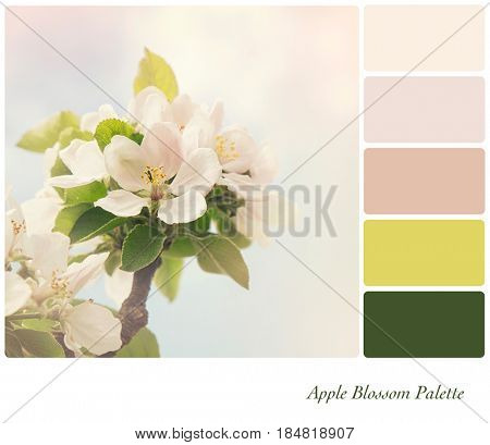 Apple blossom in springtime, with retro style processing, in a colour palette with complimentary colour swatches.