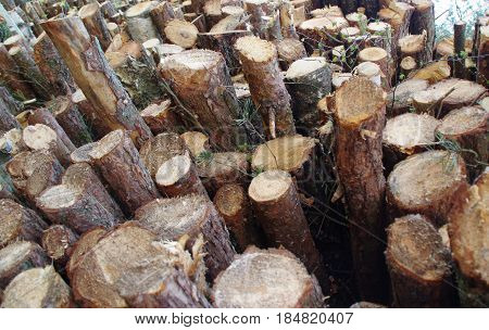 Pile of freshly cut wooden stakes. Bark
