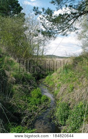 Meandering stream among wild green bushes on sky in background