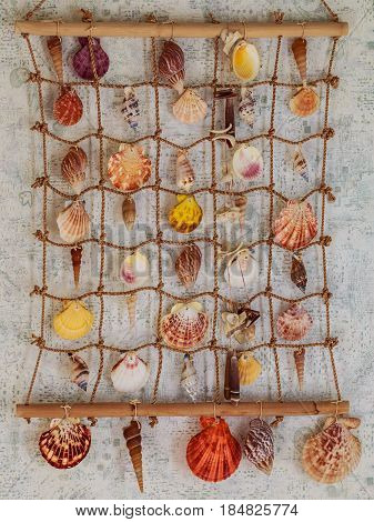 Variety seashells hanging on the wall  with wood