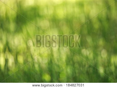 Green abstract blurred background of nature summer glade of grass