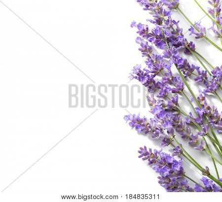 Sprigs of lavender isolated on white background.