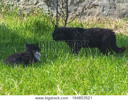 Two cats fighting on the green grass